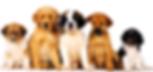 dog walking bondi, dog walking dover heights, dog walking rose bay, dog walking vaucluse, dog walking clovelly, dog walking north bondi, dog walking queens park, dog walking waverley, dog walking point piper, dog walking darling point, dog walking coogee