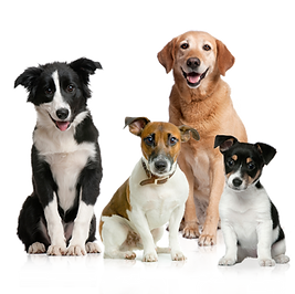 dog walking chatswood, dog walking lane cove, dog walking kirribilli, dog walking cremorne, dog walking mosman, dog walking neutral bay, dog walking north sydney, dog walking millers point, dog walking artarmon, dog walking st leonards, dog walk willoughby