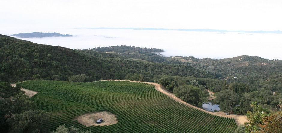 PMV - the vineyard.jpg