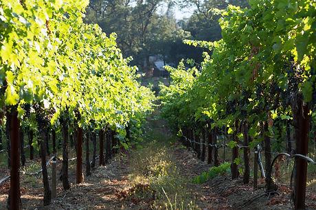 PMV - more vines.jpg