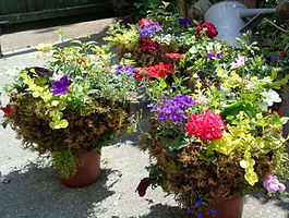 Summer Bedding Plants.JPG
