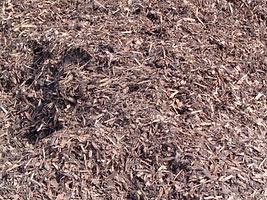 Forest Bark.JPG