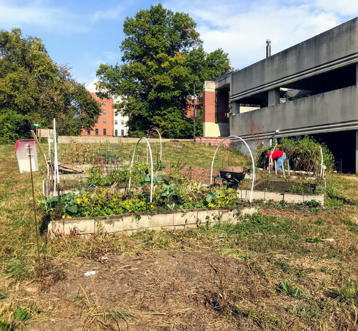 UMSL Community Garden: Feeding the Community and Growing a Connection to Nature