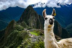 Lama In My Shot