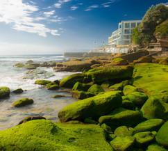 Beach Moss