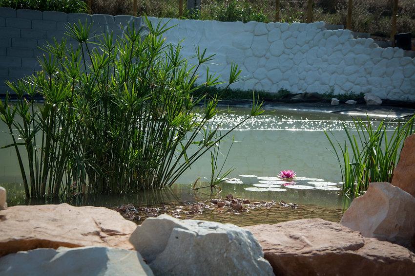 2020.09.20 lago - pietre papiro e ninfea.JPG.jpg
