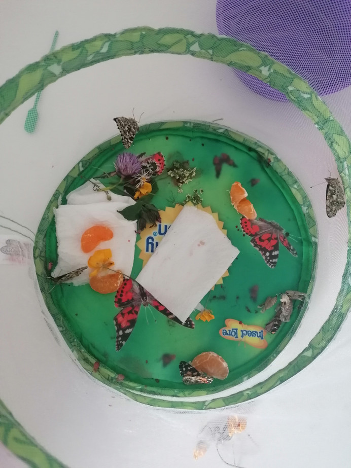 Our very hungry caterpillars!