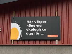 Jak kupić w Szwecji jajka