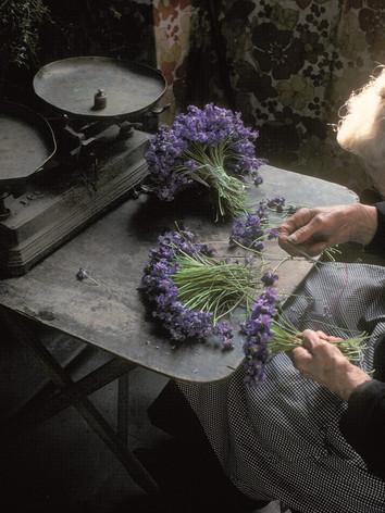 Parma Violet Harvest