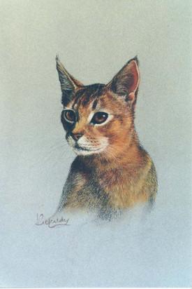 Abyssinian cat.jpg