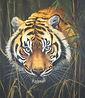 Tiger resize.jpg