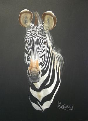 Grevys Zebra.jpg
