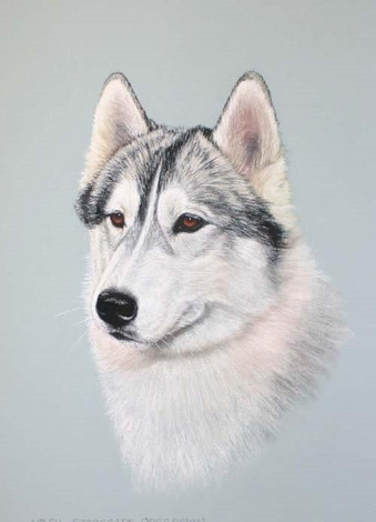 Husky A.jpg