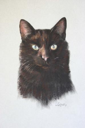 Bailey Cat Jasper QS.JPG