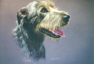 Irish Wolfhound A.jpg