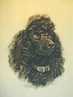 Poodle, black miniature.jpg