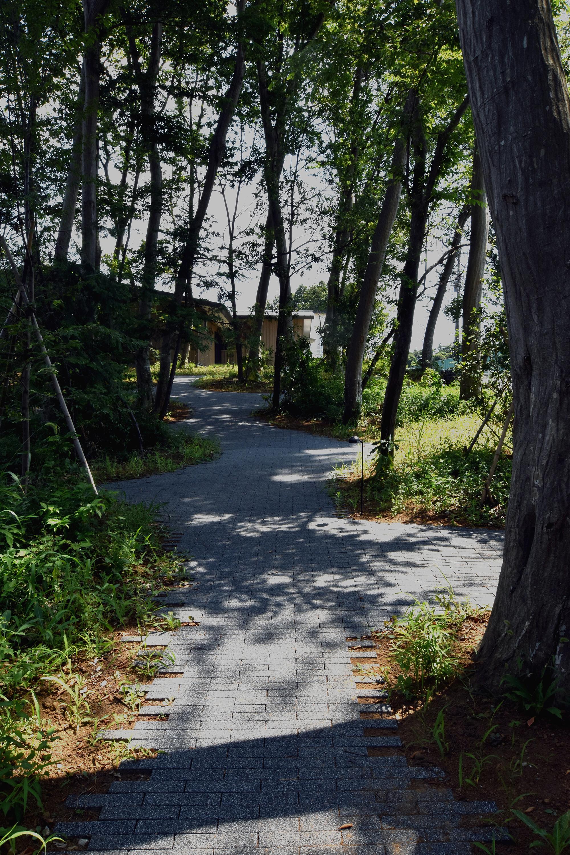森の散策路/Path in the forest