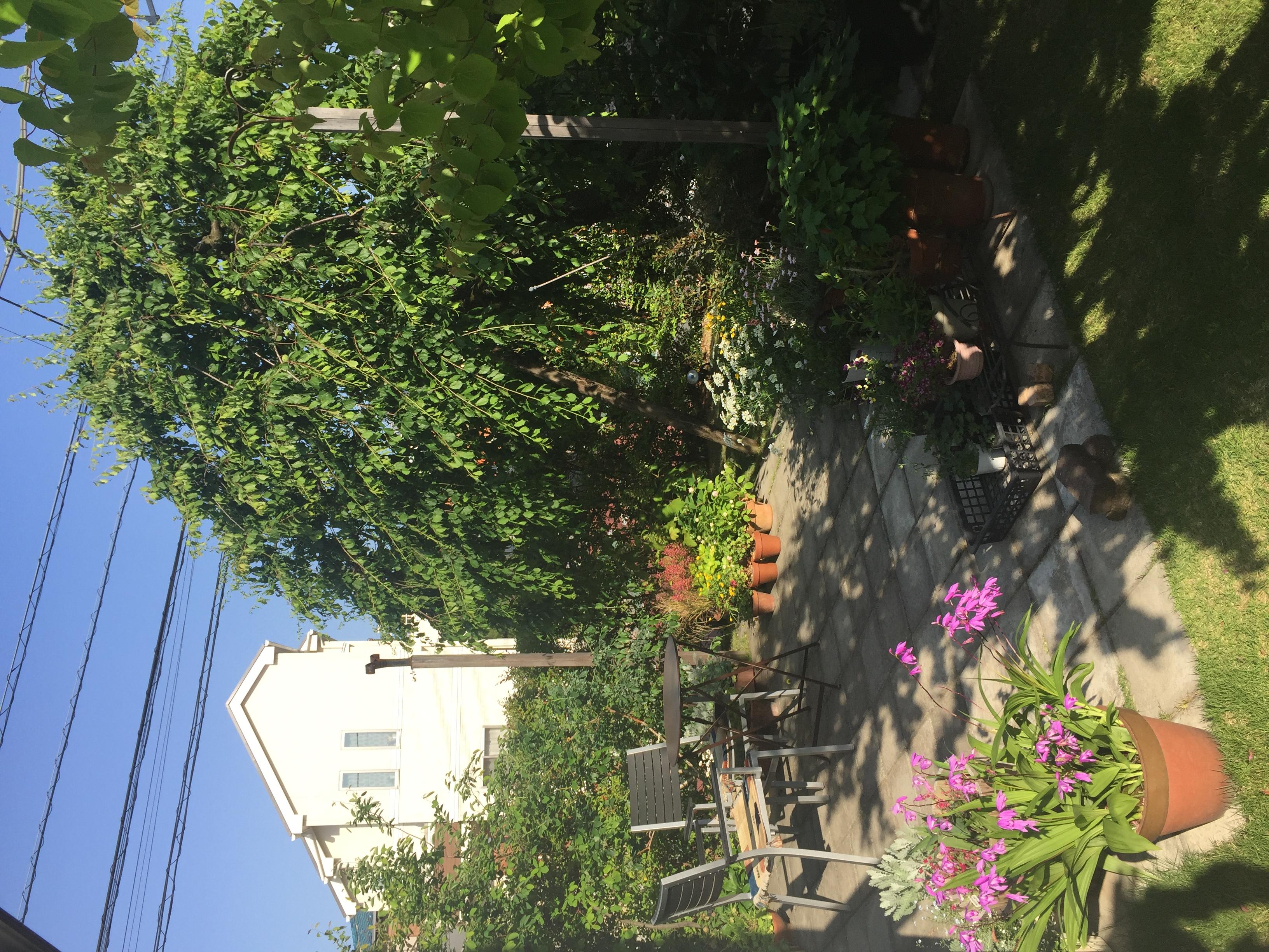 主庭/Garden