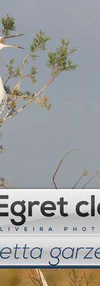 Ep. 29 - Garça-branca-pequena a limpar as penas