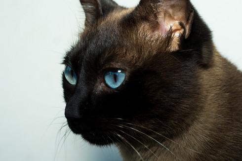 Gatos Adopção