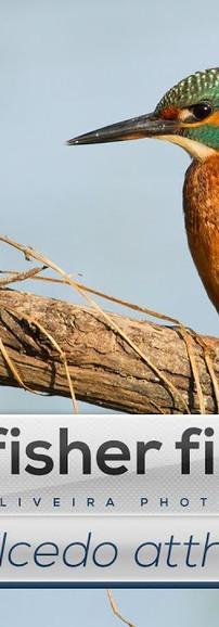 Ep. 15 - Guarda-rios a pescar um peixe