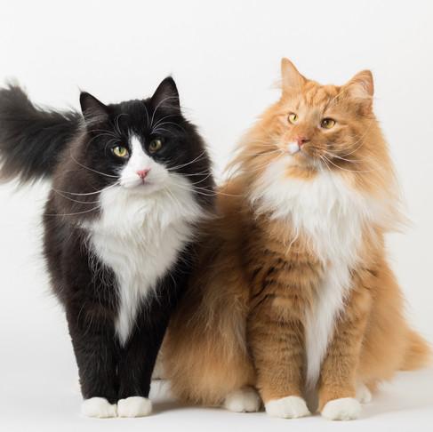 Bjorn & Loki, Fotografia em Estúdio de Animais de Estimação, em Lisboa, Portugal