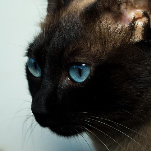 Apoia Bigodinhos, Fotografia de Animais de Estimação em Setúbal, Portugal