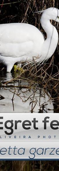 Ep. 14 - Garça-branca-pequena a limpar as penas
