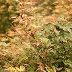 japanesemapbutterfly.png