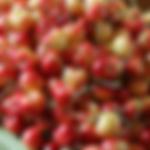 fruittreerainier.png