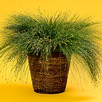 grassfiberoptic.png