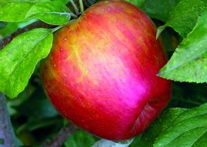 fruittreemain.png