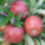 fruitapplebraeburn.png