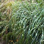 grasseslittlezebra.png