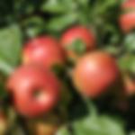 fruitapplehoneycrips.png