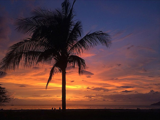 tamarindo-palm-tree-sunset