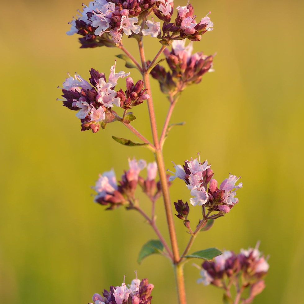 Wildflowers & Herbs Honey