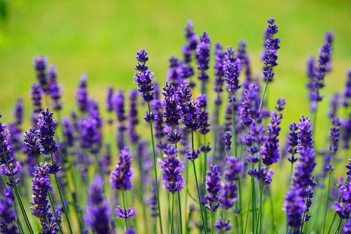 Organic Lavender Oil 有機薰衣草油 10mL