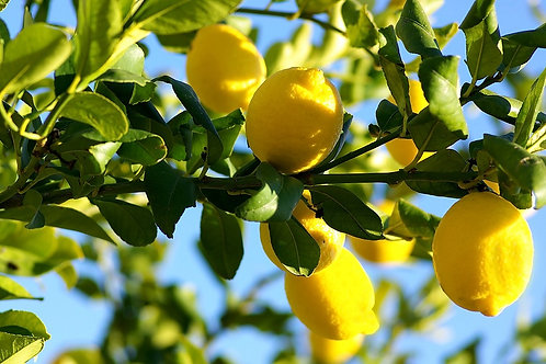 Organic Lemon Oil 有機檸檬油 10mL