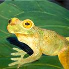 Frosch Öl.png