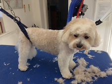 spruce cricklade dog grooming