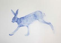 Hunting sketches, Lièvre, 2017, aquarelle sur papier, 30 x 30 cm © Ruth Gurvich