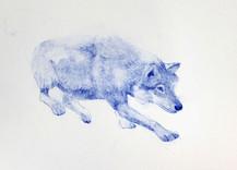 Hunting sketches, Loup, 2018, aquarelle sur papier, 24 x 24 cm © Ruth Gurvich