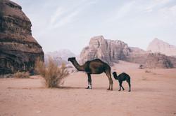 clara-ferrand-jordan-guide-24
