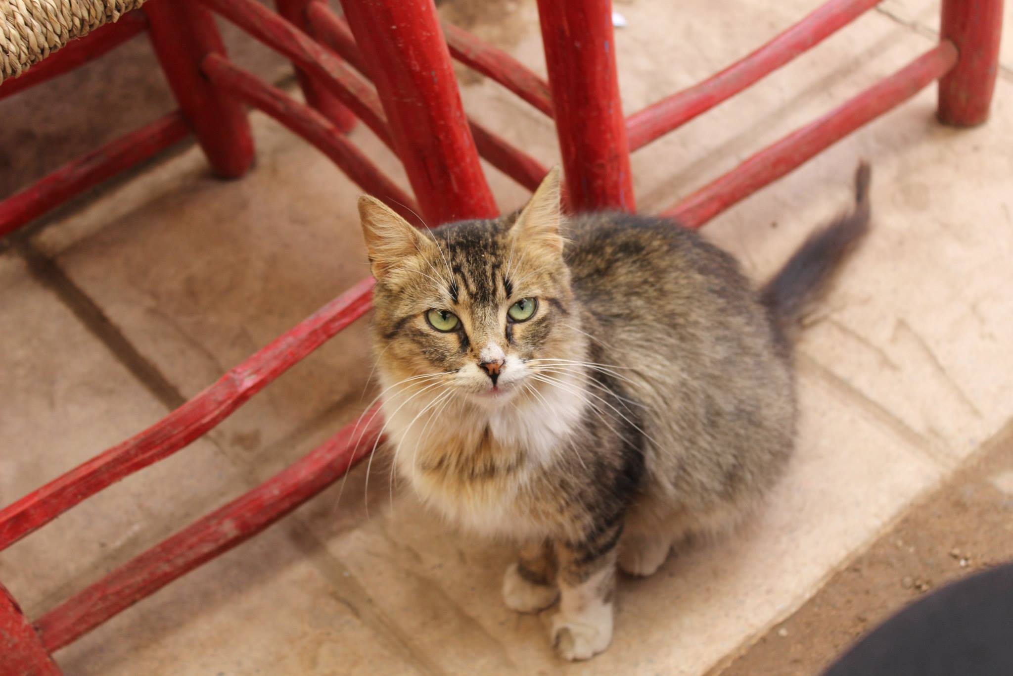 April 2015 Marrakech Morocco Cat