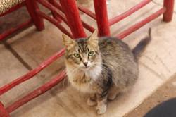 April 2015 Marrakech Morocco Cat