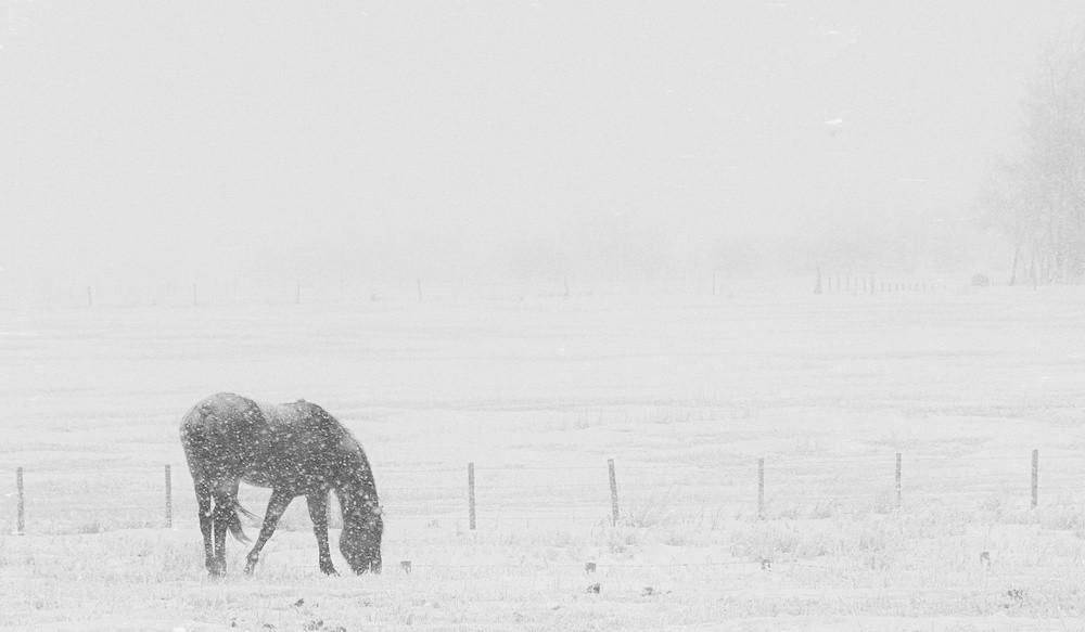 Pferde im Winter Eindecken Thermoregulation Immunsystem