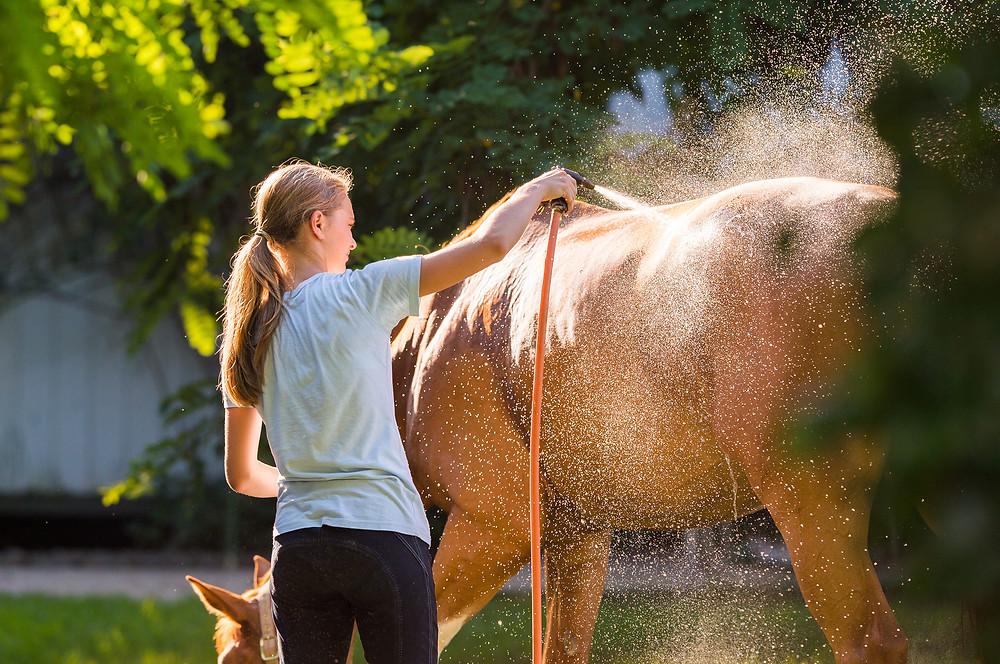 Pferd waschen Pferde waschen