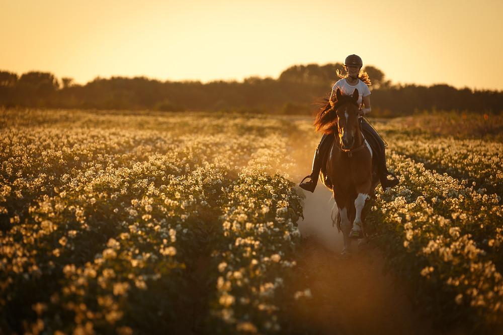 Pferde Reiten schädlich