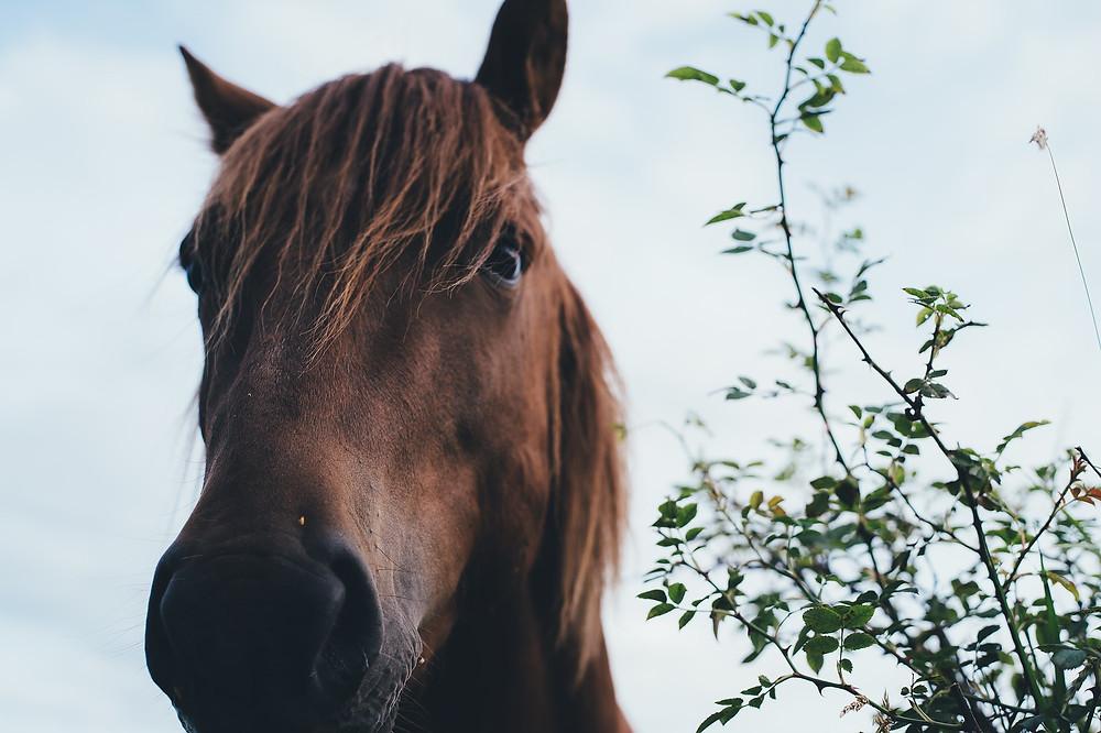 knabberäste pferd holz